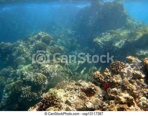 Coral arrecife - csp13117387