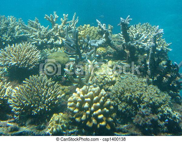 Coral arrecife - csp1400138