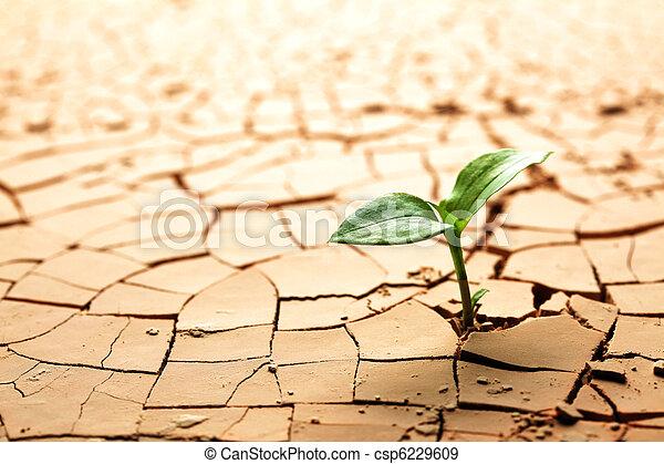 Planta en barro seco rajado - csp6229609