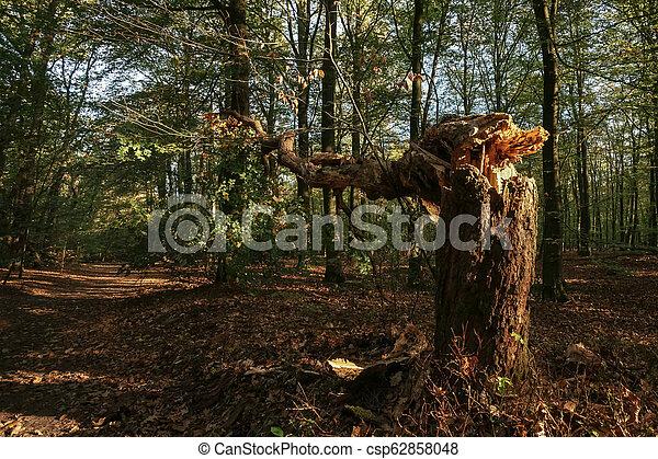 bas, frappant, arbre, forêt automne, blowed, sunlight. - csp62858048