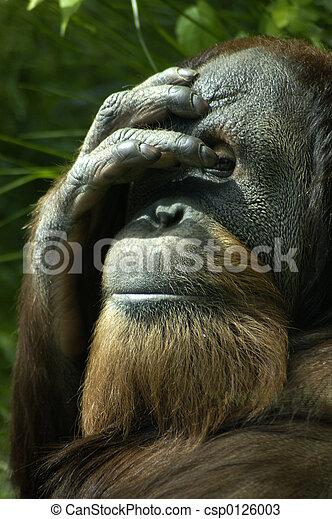 Bashful Orangutan - csp0126003