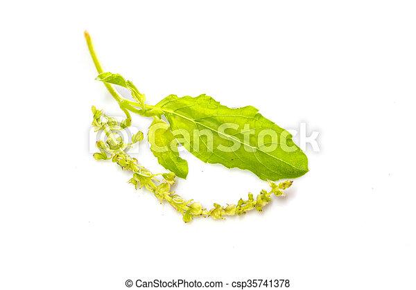 basil leaves on white - csp35741378