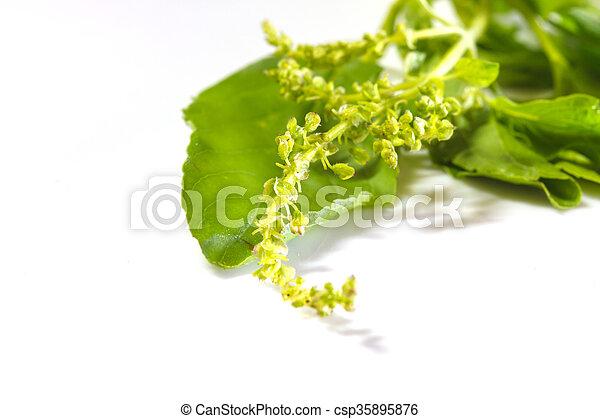 basil leaves on white - csp35895876