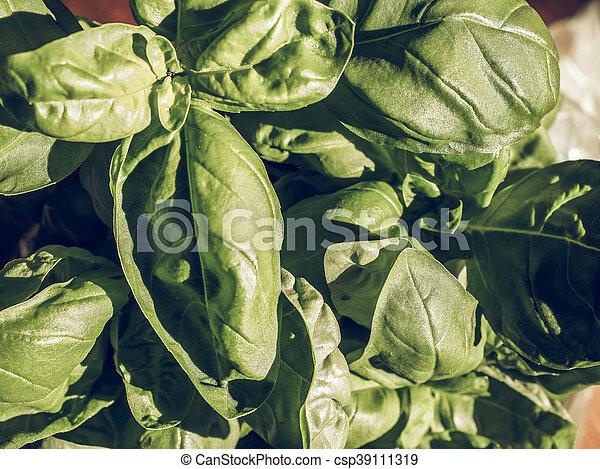 Basilic, vendange, plante, fané. Plante, basilicum ...