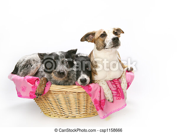 Basket of Dogs - csp1158666