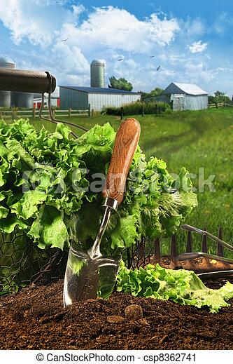 Basket of lettuce in garden - csp8362741