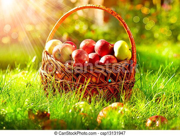 Manzanas orgánicas en la canasta. Orchard. - csp13131947