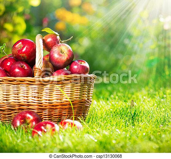 basket., organico, orchard., giardino, mele - csp13130068