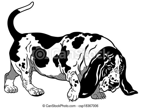 basset hound black white  - csp18367006