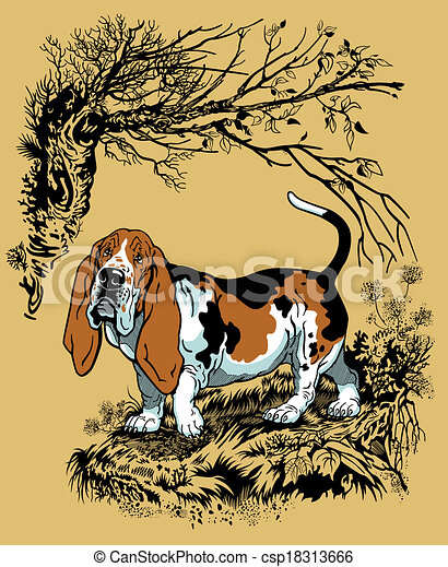 basset hound illustration  - csp18313666