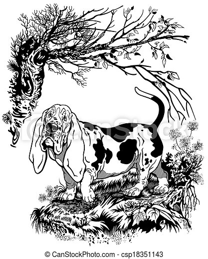 basset hound illustration  - csp18351143