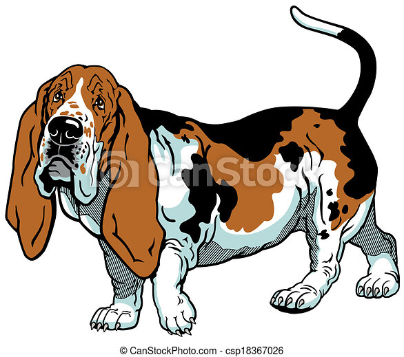 dog basset hound breed image isolated on white background vector rh canstockphoto com basset hound clipart free basset hound clipart free