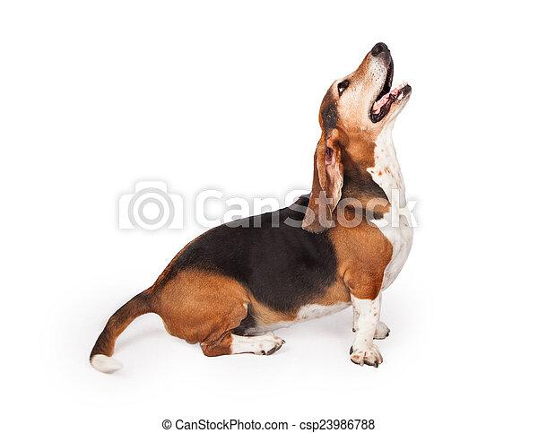 Bassotto Profilo Cane Su Dallaspetto Cane Da Caccia Profilo