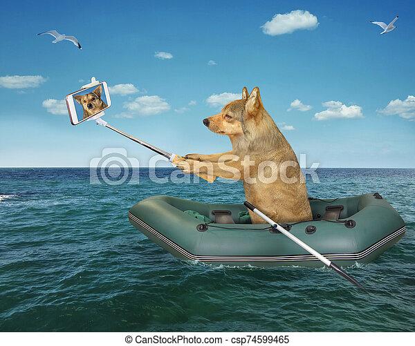 bateau, chien, marques, selfie, caoutchouc - csp74599465