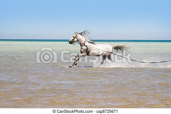 Bathing of a horse - csp8725671