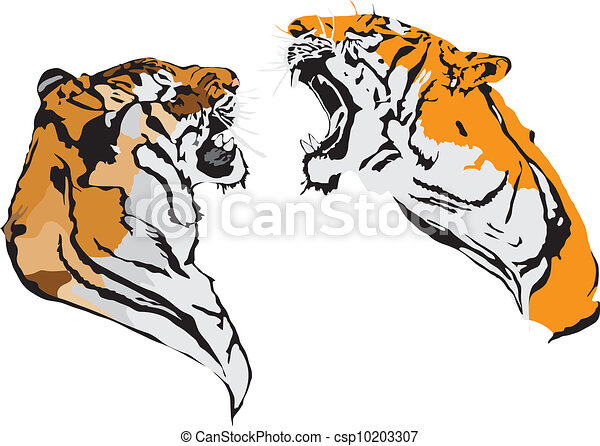 Battle of tigers - csp10203307