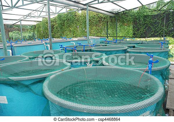 bauernhof, landwirtschaft, aquakultur - csp4468864