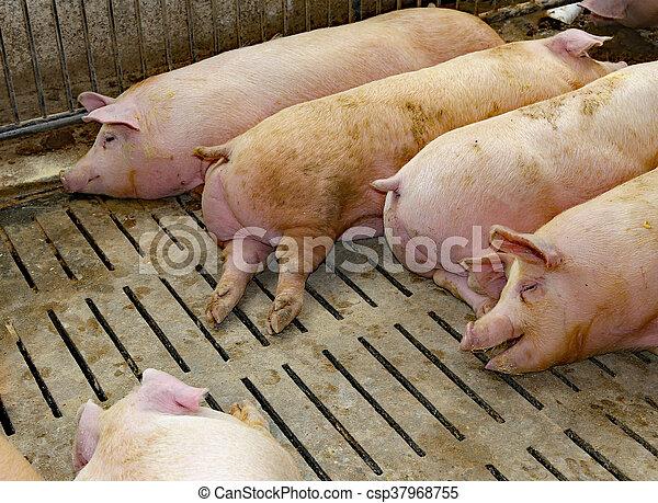 bauernhof schweine schweinestall dicker bauernhof gro schweine schweinestall dicker. Black Bedroom Furniture Sets. Home Design Ideas