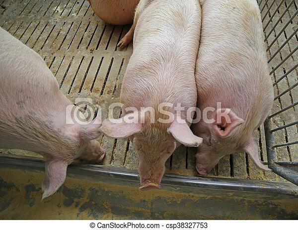 Tipp für dicke Schweine elena grimaldi blowjob