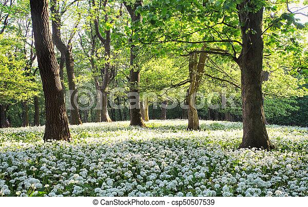 Baum, grüner wald, weisse blumen, landschaftsbild.