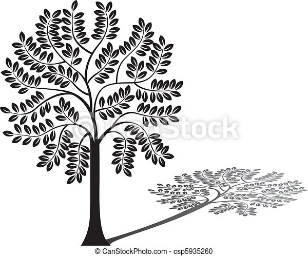 Baum Silhouette und Schatten - csp5935260