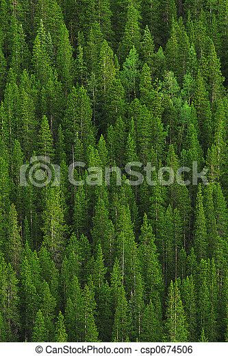 Kiefernwald - csp0674506
