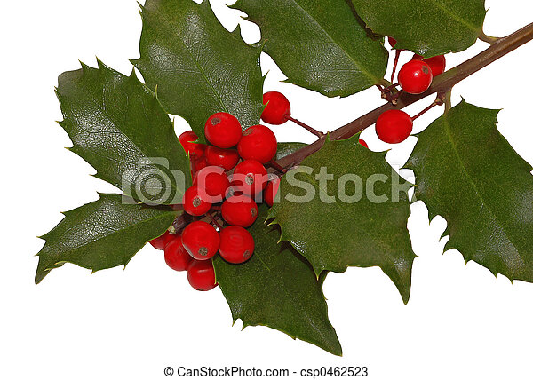 Cerezas Holly - csp0462523
