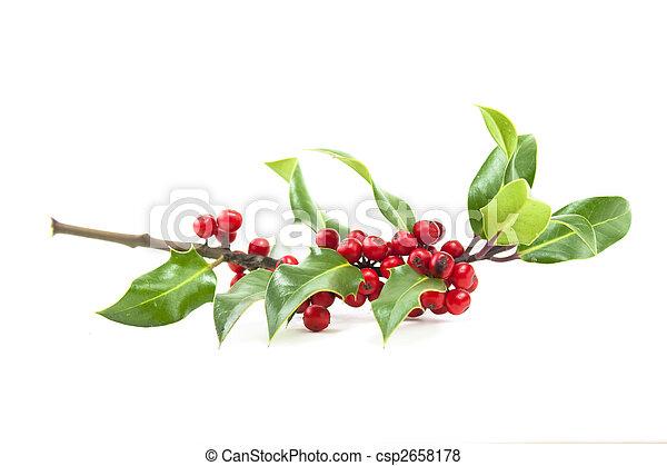 Holly y bayas rojas - csp2658178