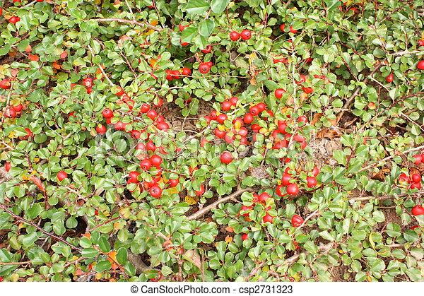 Cementerio verde con bayas rojas - csp2731323