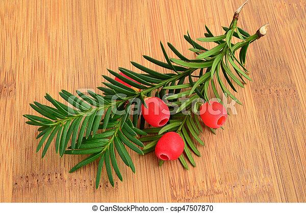 bayas, rojo, tejo, ramitas - csp47507870