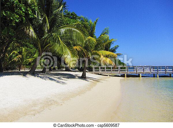Beach and palms - csp5609587