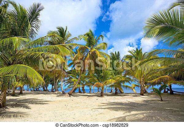 Beach and palms - csp18982829