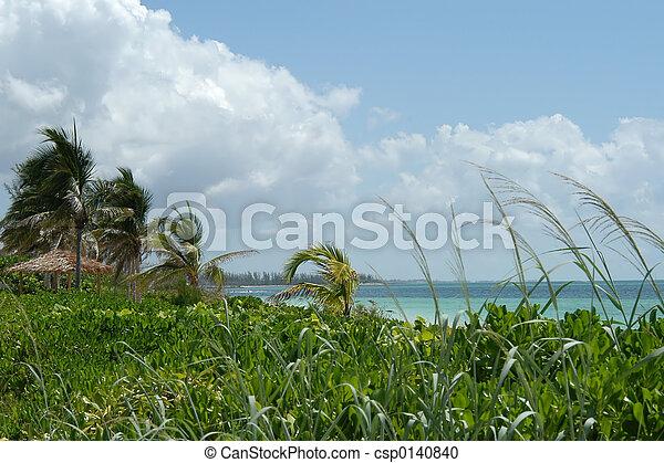 Beach and palms - csp0140840