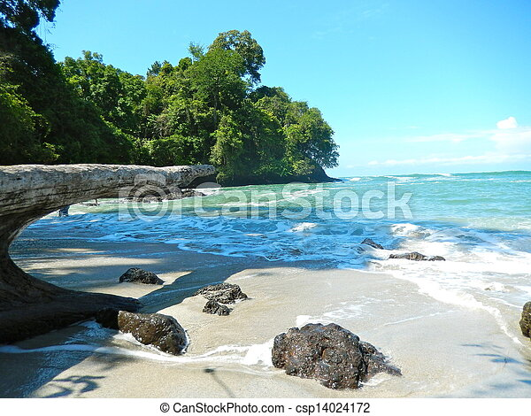beach and tropical sea with clear water - csp14024172