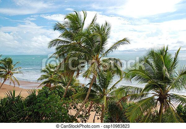 Beach and turquoise water of Indian Ocean, Bentota, Sri Lanka - csp10983823
