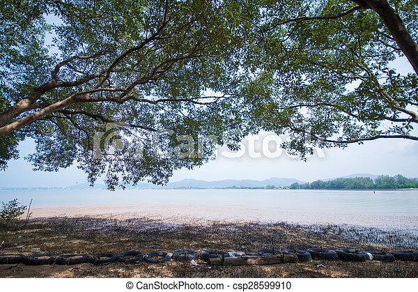 Beach at low tide - csp28599910