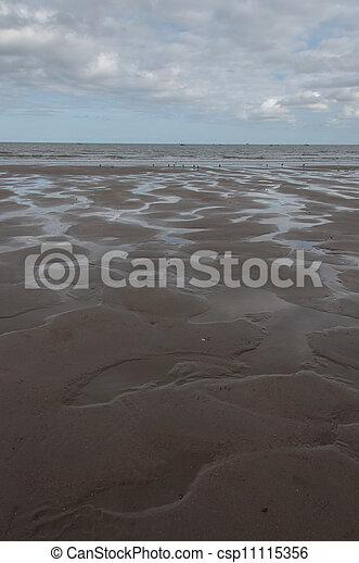 Beach at low tide - csp11115356