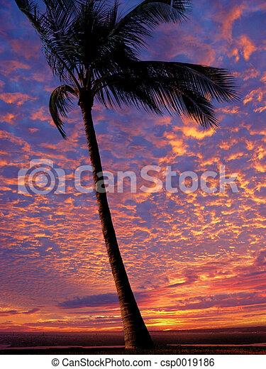 Beach at sunset - csp0019186