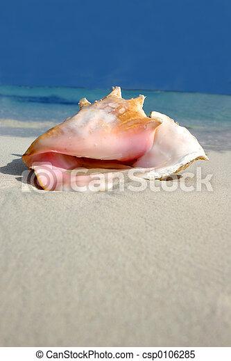 Beach Conch Series - csp0106285
