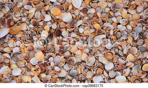 colorful seashells