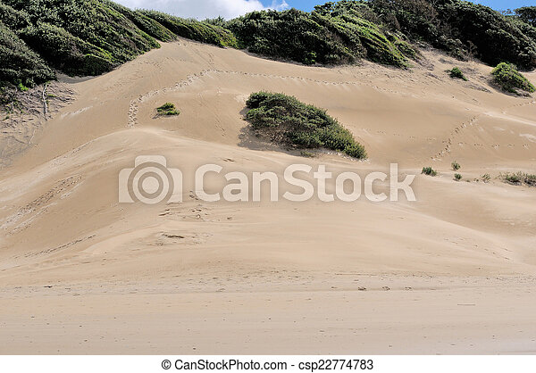 Beach dunes at East London South Africa  - csp22774783