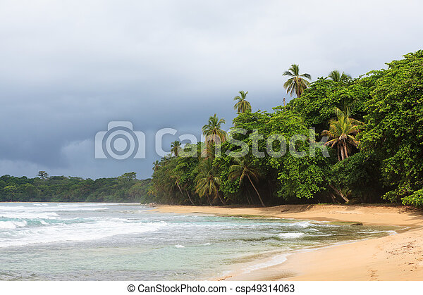 Beach forest and storm sky - csp49314063