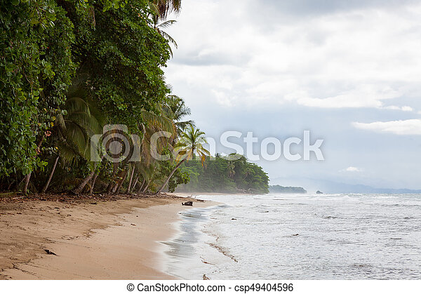 Beach forest and storm sky - csp49404596