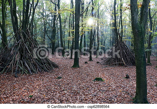 Beach forest in the Netherlands - csp62898564