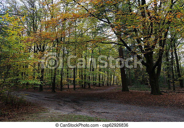 Beach forest in the Netherlands - csp62926836