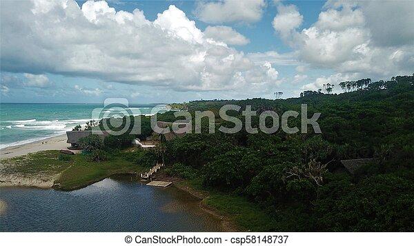 Beach forest - csp58148737