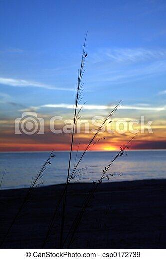 Beach Grass - csp0172739