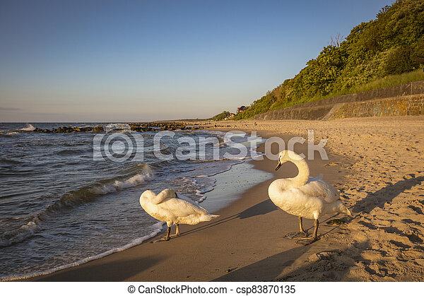 Beach in Niechorze - csp83870135