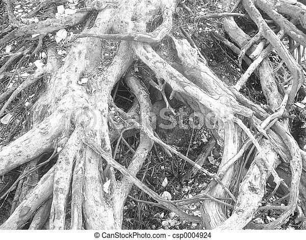 Beach roots - csp0004924
