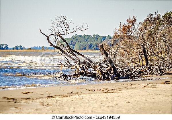 beach scenes around folly beach south carolina - csp43194559